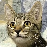 Adopt A Pet :: Haddie - Winchester, CA