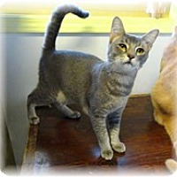 Adopt A Pet :: Shannon - Shelton, WA