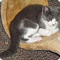 Adopt A Pet :: Patsy - N. Billerica, MA