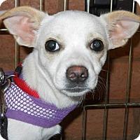 Adopt A Pet :: Zena - dewey, AZ
