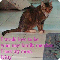 Adopt A Pet :: Kitty - Bonita Springs, FL