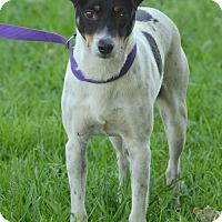 Adopt A Pet :: Caleb - Charlemont, MA