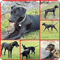 Adopt A Pet :: RAVEN - Davenport, FL