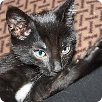 Adopt A Pet :: Slate (LE) - Little Falls, NJ