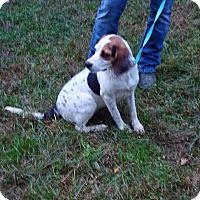 Adopt A Pet :: Gracie - Dumfries, VA
