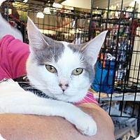 Adopt A Pet :: Fawn - San Ramon, CA