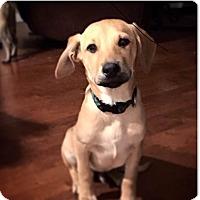 Adopt A Pet :: Gevo - San Diego, CA