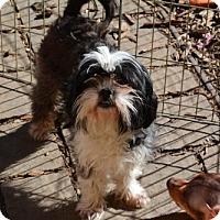 Adopt A Pet :: Morgan - Sunnyvale, CA