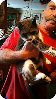 Domestic Mediumhair Cat for adoption in Lithia, Florida - Twiggy