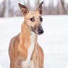 Adopt A Pet :: E's Reddington