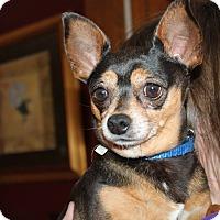 Adopt A Pet :: Coco - Naperville, IL