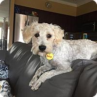 Adopt A Pet :: Petie 3345 - Toronto, ON