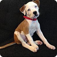 Adopt A Pet :: Piper - Orange, CA