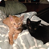 Adopt A Pet :: Sunny - Nuevo, CA