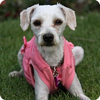 Adopt A Pet :: TESS - Newport Beach, CA