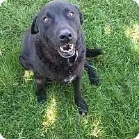 Adopt A Pet :: Otis - Ogden, UT