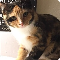 Adopt A Pet :: Winnie - Southington, CT