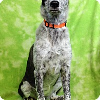 Adopt A Pet :: CHARITY - Westminster, CO