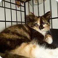 Adopt A Pet :: JAMAY - Medford, WI