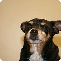 Adopt A Pet :: Bailey - Wildomar, CA