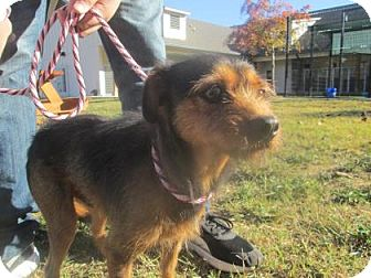 Terrier (Unknown Type, Medium) Mix Dog for adoption in Cumming, Georgia - Archie