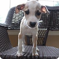 Adopt A Pet :: Charlie - West Grove, PA