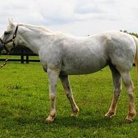 Adopt A Pet :: Ivy - Lovettsville, VA