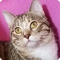 Adopt A Pet :: Jessa - Colfax, IA