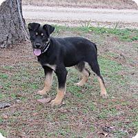Adopt A Pet :: JUNEAU - Bedminster, NJ