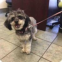 Adopt A Pet :: A419974 - San Antonio, TX