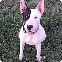 Adopt A Pet :: Lil Girl aka Rue - Sachse, TX