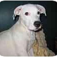 Adopt A Pet :: Icy - Milwaukee, WI