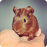 Adopt A Pet :: Frostina - Pittsburgh, PA