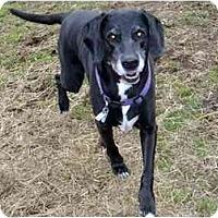 Adopt A Pet :: Sadie - New Kensington, PA
