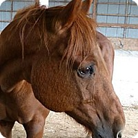 Adopt A Pet :: Boyd - Lakebay, WA