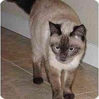 Adopt A Pet :: Maya - Davis, CA