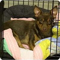 Adopt A Pet :: JoJo - conyers, GA