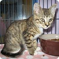 Adopt A Pet :: Serena - Shelton, WA