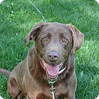 Adopt A Pet :: Big Dude - Lewisville, IN