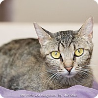 Adopt A Pet :: Petunia - Fountain Hills, AZ