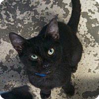 Adopt A Pet :: Cash - Arkadelphia, AR