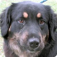 Adopt A Pet :: Joey - Germantown, MD