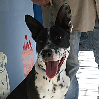 Adopt A Pet :: Sparky - Long Beach, CA