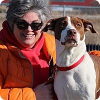 Adopt A Pet :: Miley-Prison Dog - Elyria, OH