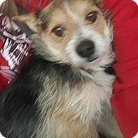Adopt A Pet :: Jackson - Ogden, UT