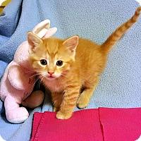Adopt A Pet :: Mr. Mustard - Bentonville, AR