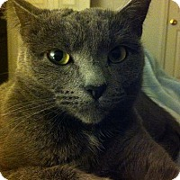 Adopt A Pet :: Olive - Wilmington, NC