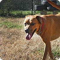 Adopt A Pet :: Kayleigh - Nashville, TN