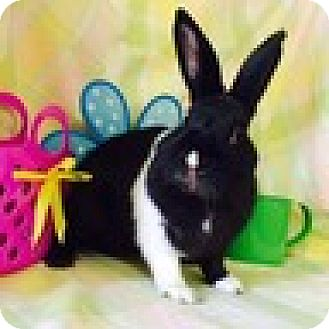Dutch Mix for adoption in Paramount, California - Homer