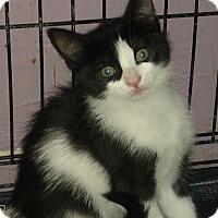 Adopt A Pet :: Zipes - Whittier, CA